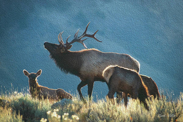 Photograph - Elk In Autumn by Mark Miller