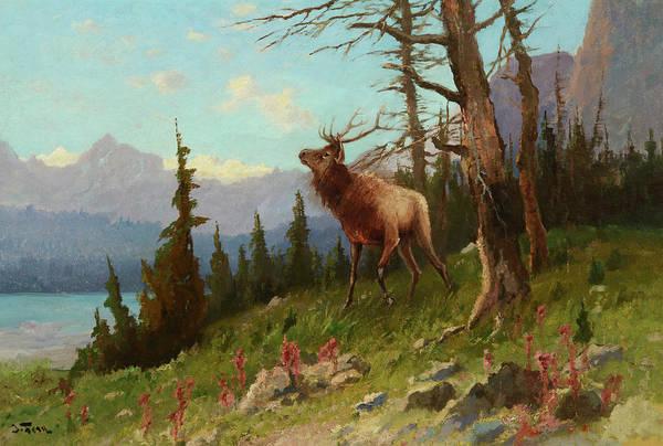 Art In America Painting - Elk In The Mountains by John Fery