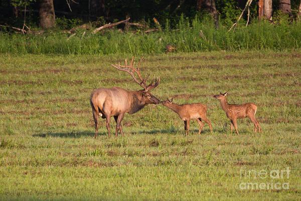 Photograph - Elk Kisses by Jemmy Archer