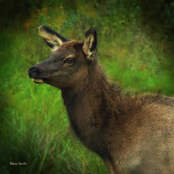 Photograph - Elk Of Benezette by Rebecca Samler