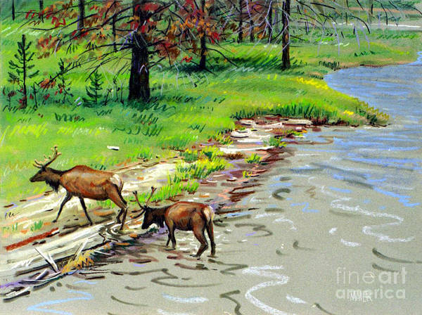 Wall Art - Painting - Elks Crossing by Donald Maier