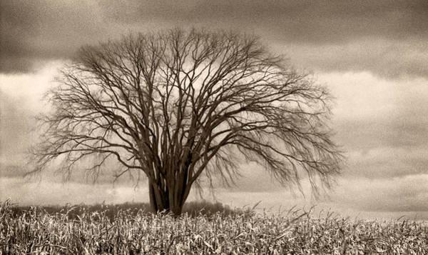 Photograph - Elm Fortress by Jill Love