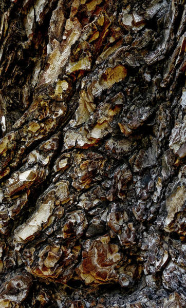 Wall Art - Photograph - Elm Tree Bark Pattern by Frank Tschakert