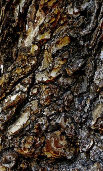 Elm Photograph - Elm Tree Bark Pattern by Frank Tschakert