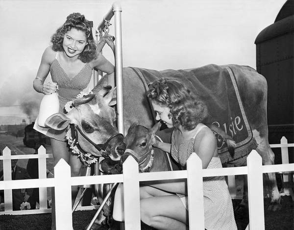 Photograph - Elsie The Cow Visits Sf by Underwood Archives