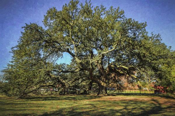 Photograph - Emancipation Oak Tree by Jerry Gammon