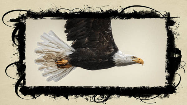 Photograph - Embellished Eagle by Wes and Dotty Weber