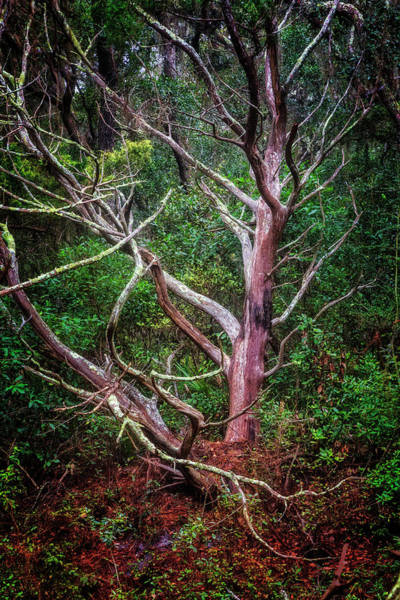 Photograph - Embracing The Forest by Debra and Dave Vanderlaan