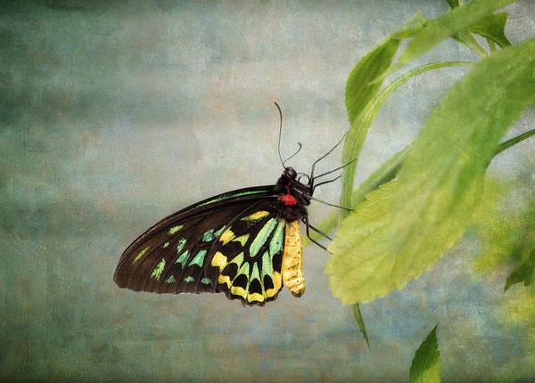 Wall Art - Photograph - Emerald Beauty by Kim Hojnacki