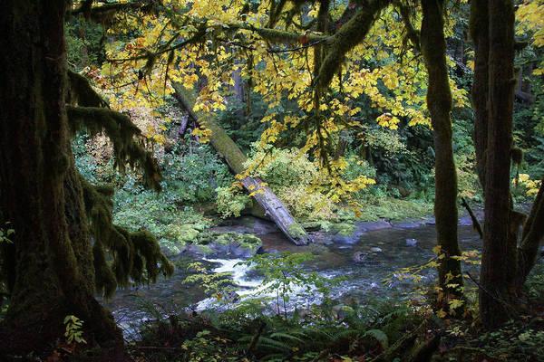 Photograph - Emerald Pools Hike #1 by Ben Upham III