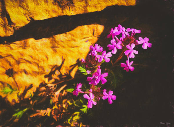 Photograph - Emergence by Anna Louise