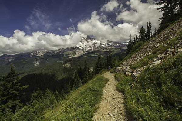Photograph - Emerging Above Timberline by Doug Scrima