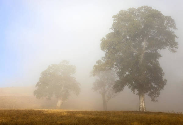Paddock Wall Art - Photograph - Emerging From The Fog by Mike  Dawson