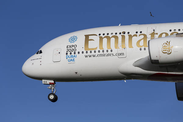 Wall Art - Photograph - Emirates A380 Airbus And Pigeon by David Pyatt