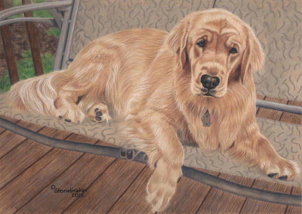 Golden Retriever Drawing - Emma On The Glider by Debbie Stonebraker