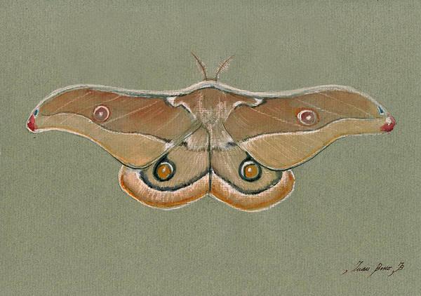 Wall Art - Painting - Emperor Gum Moth by Juan Bosco