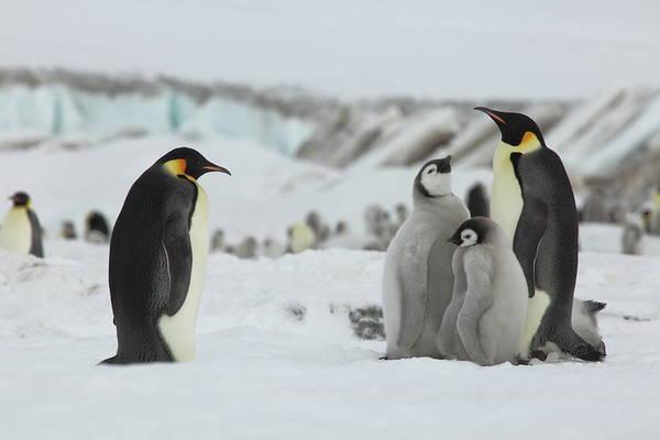Wall Art - Photograph - Emperor Penguin Landscape by Bruce J Robinson