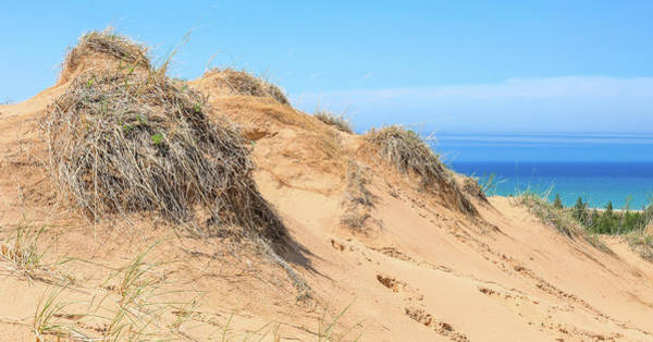 Photograph - Empire Bluff Trail Sand Dunes by Dan Sproul