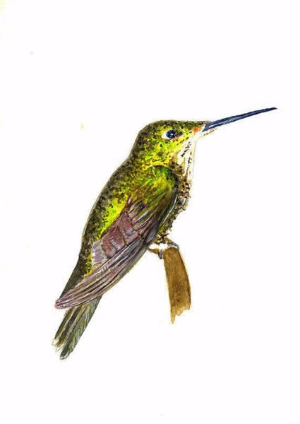 Wall Art - Painting - Empress Hummingbird by Michael Vigliotti