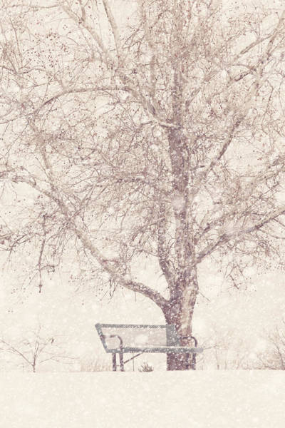 Wall Art - Photograph - Empty Bench In A Snowstorm by Debi Bishop