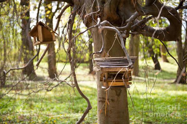 Wall Art - Photograph - Empty Bird Feeders In Park by Arletta Cwalina