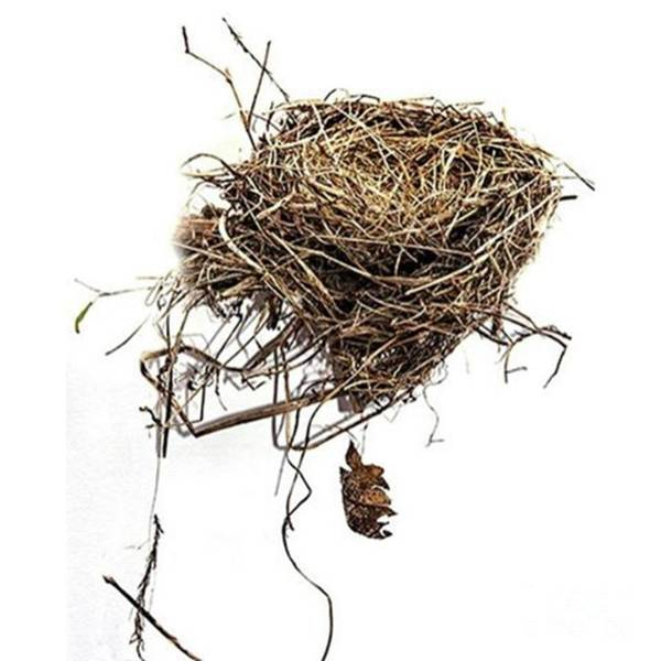 Macro Photograph - Empty Nest Blown Out Of A by Larry Braun