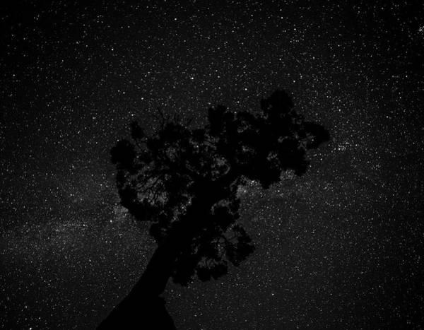 Empty Night Tree Art Print
