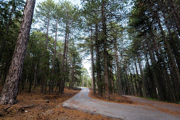 Scenery Wall Art - Photograph - Empty Road Passing Through The Forest by Michalakis Ppalis