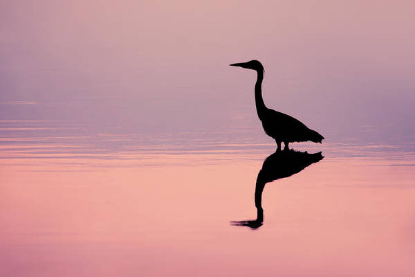 Wade Photograph - Empty Spaces - Grey Heron Silhouette by Roeselien Raimond