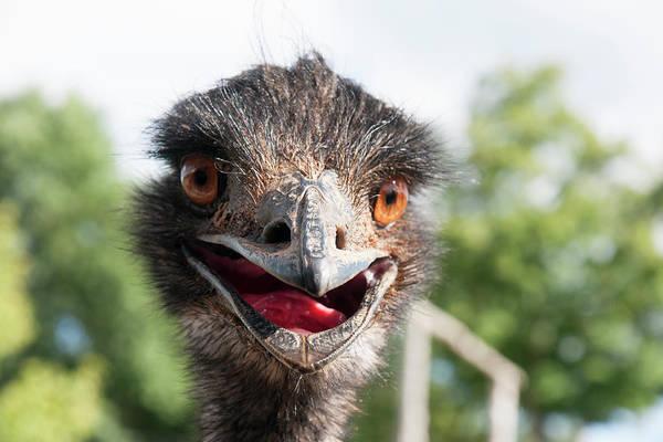 Bernadette Photograph - Emu Smiling by Bernadette Van der Vliet