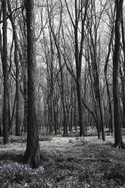 Photograph - Enchant by Dylan Punke