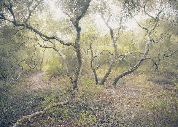 Photograph - Enchanted Elfin Forest by Alexander Kunz