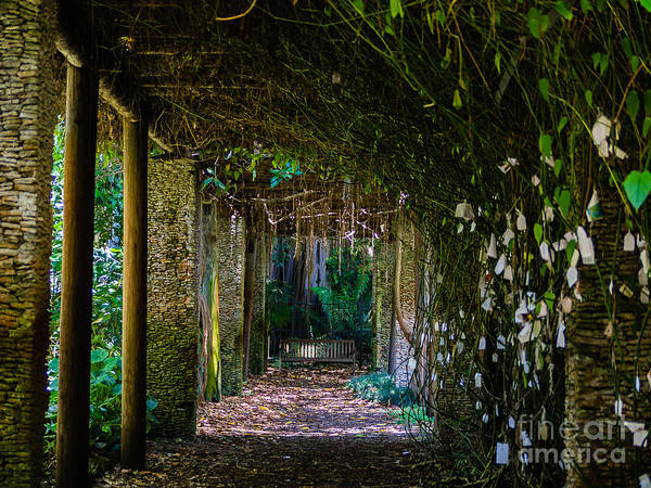 Photograph - Enchanted Entrance by Robin Zygelman