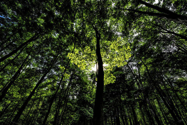 Photograph - Enchanted Forest by Doug Gibbons
