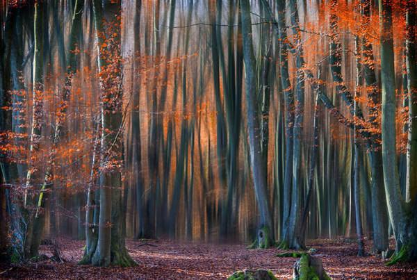 Woods Photograph - Enchanted Forest by Em-photographies