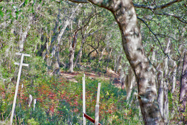 Photograph - Enchanted Forest by Gina O'Brien
