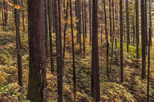 Photograph - Enchanted Forest by Loree Johnson