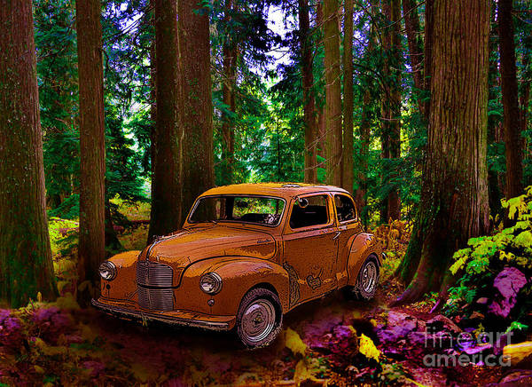Photograph - Enchanted Forest by Vivian Martin