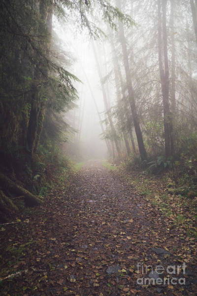 Photograph - Enchanted Trail by Carrie Cole