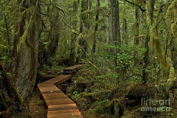 Photograph - Enchanting Boardwalk by Adam Jewell
