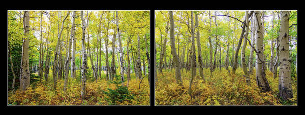 Photograph - Enchanting Forest by James BO Insogna
