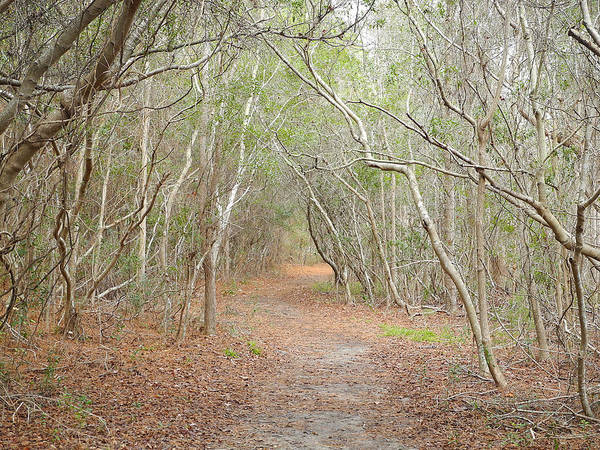 Photograph - Enchantment Of The Charleston Wood by Lynda Lehmann