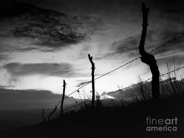 Photograph - Enclosure 2 by Bruno Spagnolo