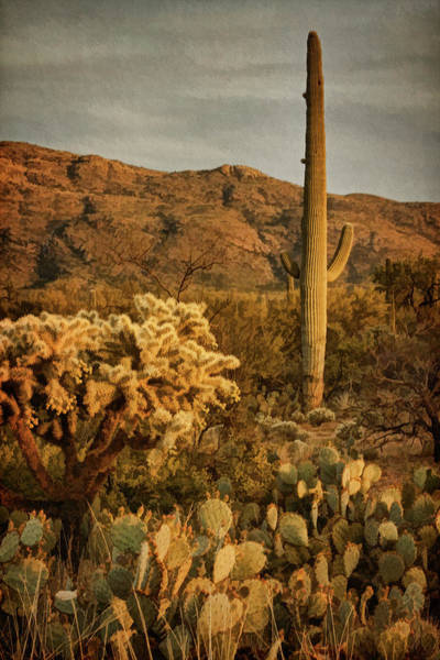 Photograph - End Of A Desert Day Bz by Theo O'Connor