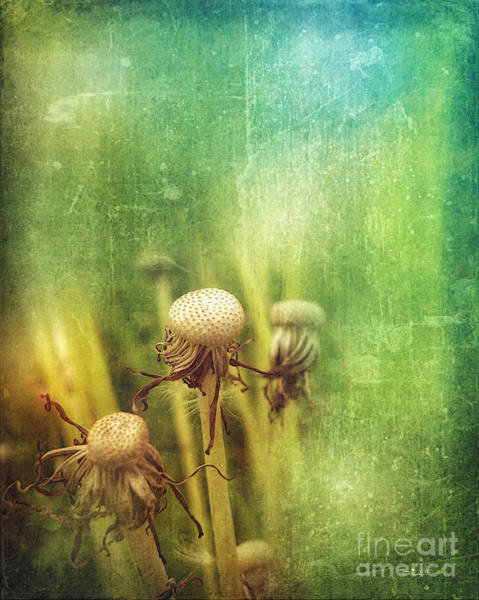 Photograph - End Of May by Jutta Maria Pusl