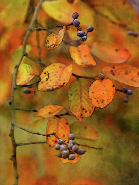 Photograph - End Of Season 6558 Idp_2 by Steven Ward