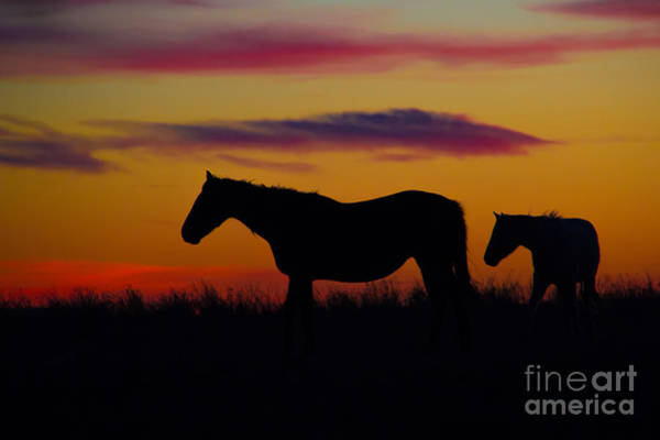 Photograph - End Of The Day by Jim McCain