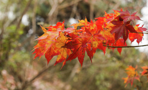 New Leaf Photograph - End Of The Season by Hyuntae Kim