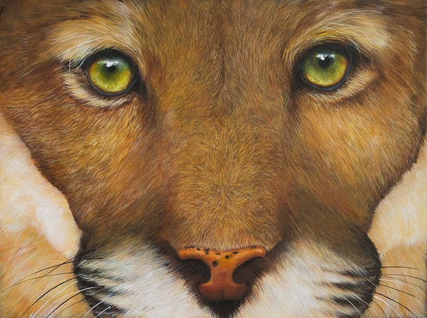 Painting - Endangered Eyes by Nancy Lauby