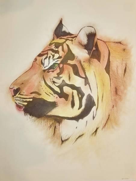 Sumatran Drawing - Endangered Sumatran Tiger by Caitlin Mitchell